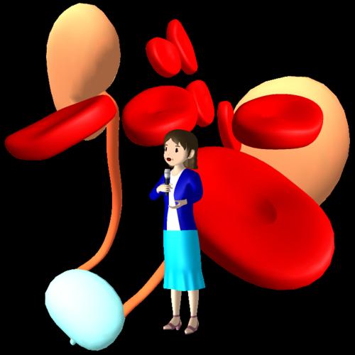 EPO,エポ,エリスロポエチン,腎臓,なぜ,役目